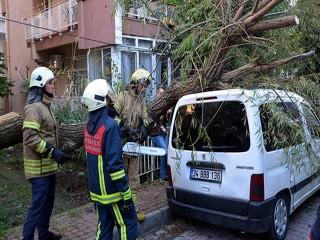 Avcılar'da otomobilin üstüne ağaç devrildi