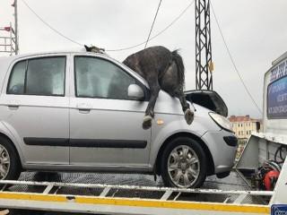 Korkunç kaza: 3 at öldü