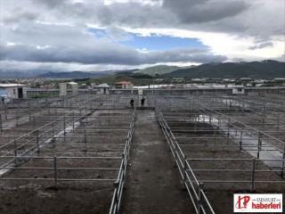 Ardahan Belediyesi Hayvan Pazarı'nı kiralama usulüyle ihaleye çıkaracak