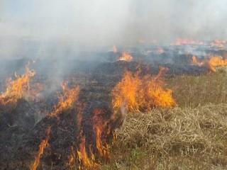 Silivri'de buğday tarlası alev alev yandı