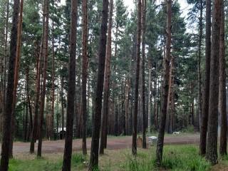 Ardahan Ormanlarında Piknik ve Mangal Yasaklandı
