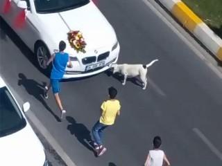 Esenyurt'ta bir grup çocuk, trafikteki gelin arabasının önüne atladı