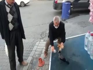 Esenyurt'ta vatandaş ile karganın dostluğu