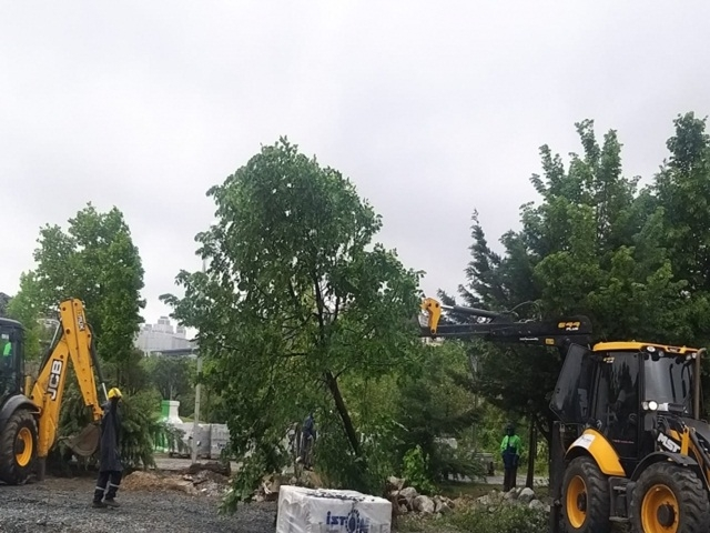 Beylikdüzü belediyesi 160 ağacı kökünden söktü